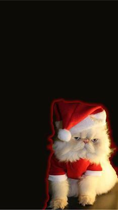 萌宠,宠物,猫,圣诞节,可爱