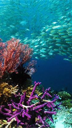 萌宠,风景,海底世界,鱼,珊瑚,蓝色