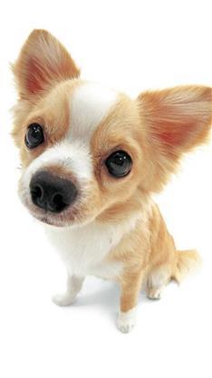 萌宠,动物,狗,汪星人,可爱,萌,黄色