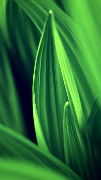 植物,叶子,绿叶,清新,自然,绿色