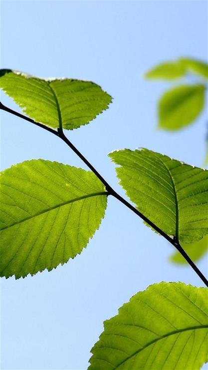 植物,叶子,绿叶,蓝天,自然,绿色