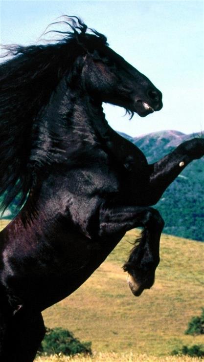手机壁纸动物马