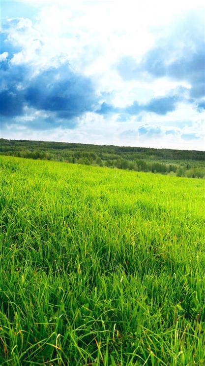 深绿色草地手机壁纸-绿色草地壁纸|深绿色护眼壁纸|绿色草地图片手机