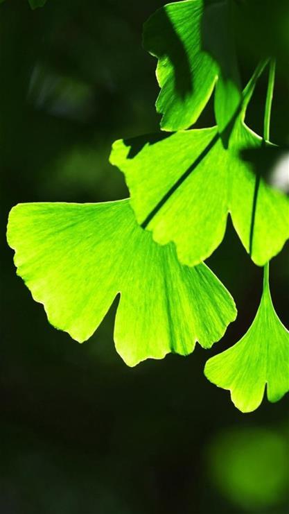 植物,叶子,唯美,绿叶,自然,绿色