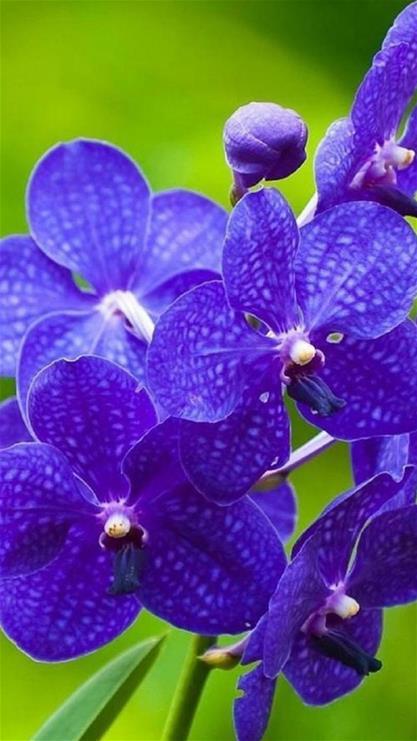 手机壁纸植物花卉
