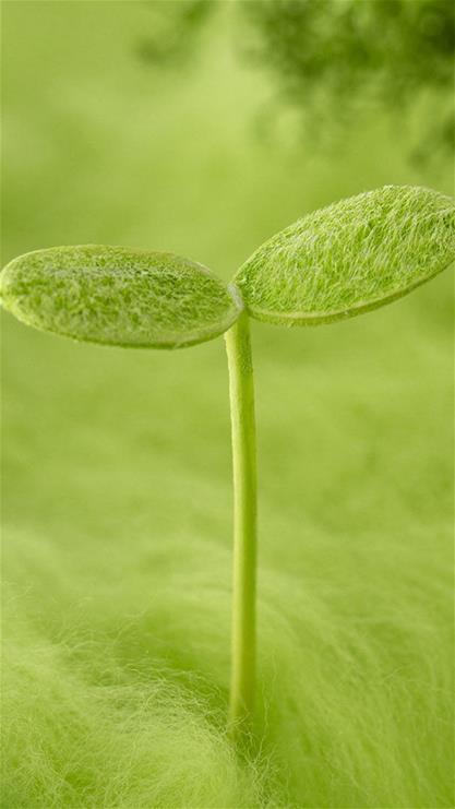 ppt 背景 壁纸 电脑桌面 发芽 绿色 绿色植物 嫩芽 嫩叶 矢量 新芽