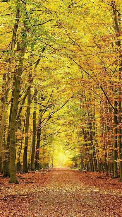 风景,枫叶,小路,树林,黄色