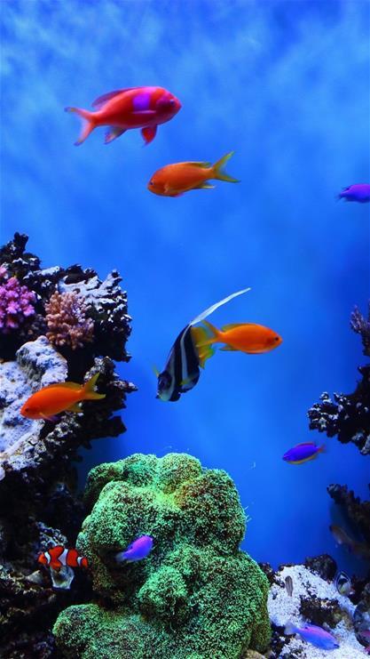 萌宠,鱼,海底世界,大海,蓝色,动态,动态壁纸,放松