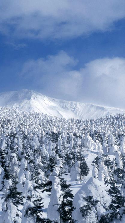 雪,雪山,树林,蓝天,白云,蓝色