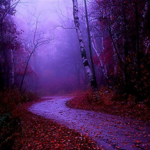 森林,夜晚,落叶,紫色
