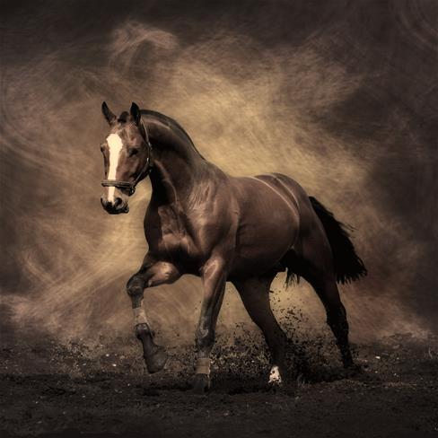马动物 人性姣 动态图