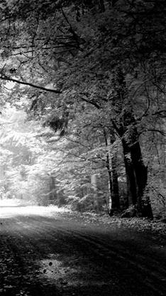 风景,树,森林,黑白,灰色
