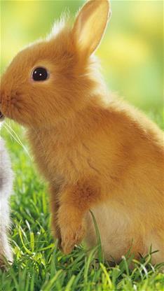 天生一对,萌宠,兔子,可爱