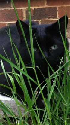 iphone6黑猫壁纸_iphone6手机黑猫壁纸