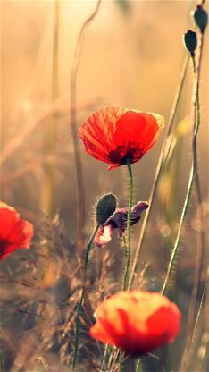 植物,风景,花,唯美,阳光,棕色