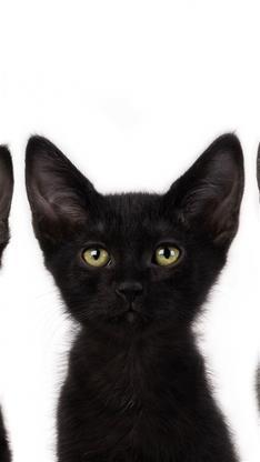 iphone6黑猫壁纸_iphone6手机黑猫壁纸_iphone6黑猫_6