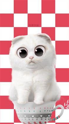 萌宠,猫,可爱,萌