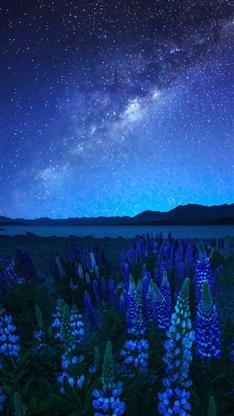 星空,树,河流,夜晚,风景,彩色