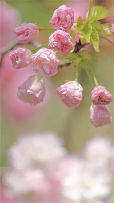 文艺花朵植物插画