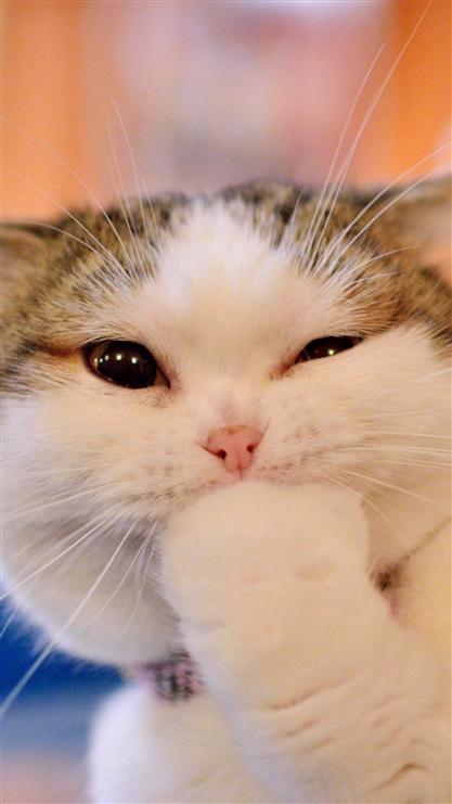 动物 猫 猫咪 小猫 桌面