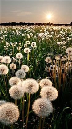 植物,唯美,梦幻,阳光,彩色